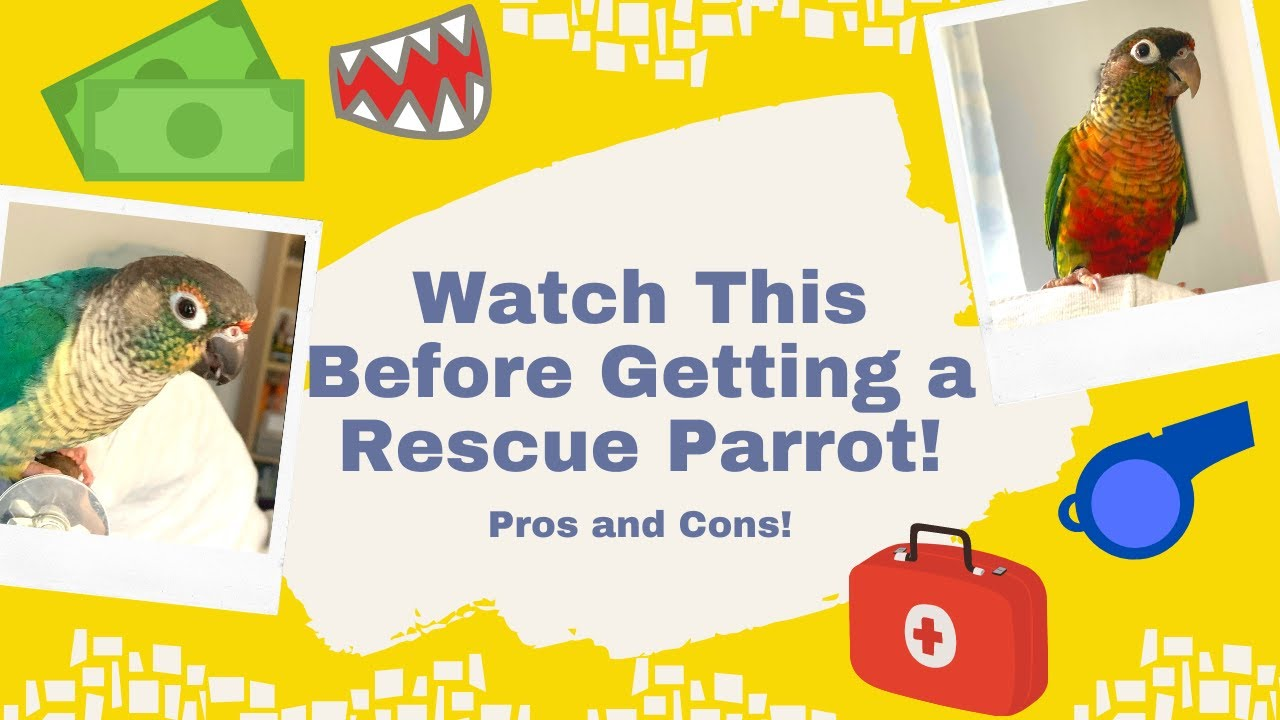 Conure Sounds and Their Meanings   Parrot Behaviour   WarGamingParrot